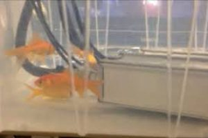 RT FISH LCS